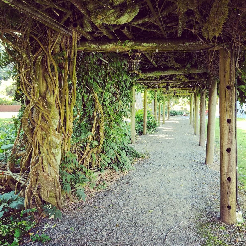 vines over a walkway